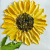 Sunflower Oil Impasto Painting