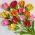bright tulip oil impasto painting