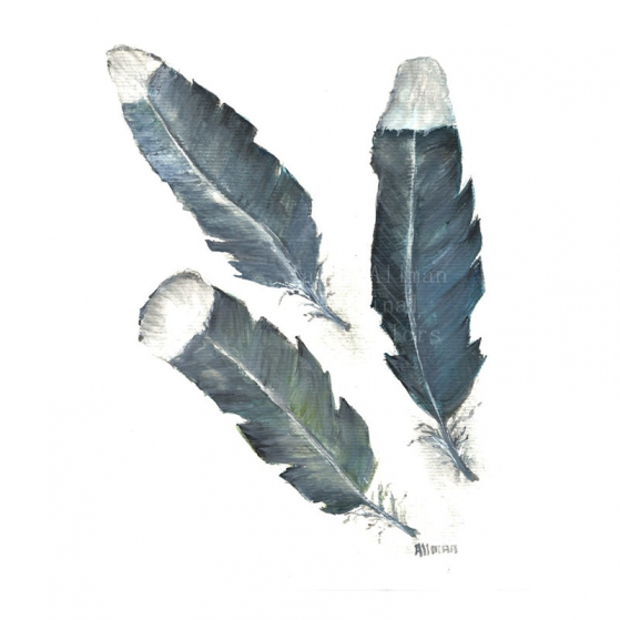 Three Feathers, Feather Study
