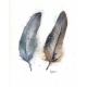 Two Turkey Feathers Watercolor, Feather Series