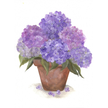 purple hydrangea watercolor